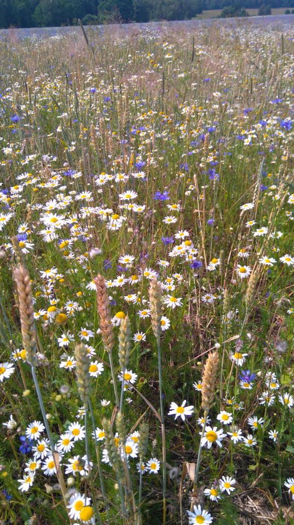 Ностальгия.... Блиц: летние цветы