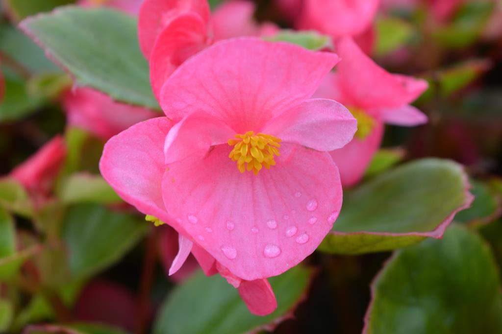 После дождя. Блиц: летние цветы
