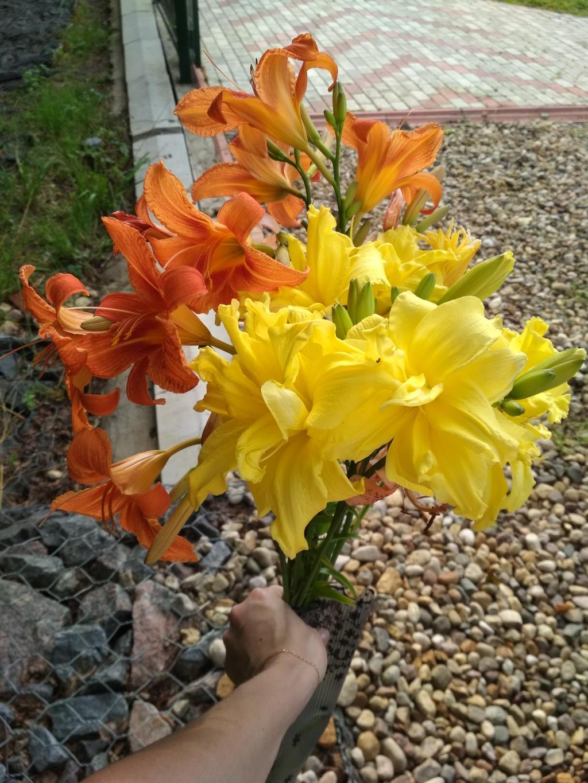 Лилейники. Блиц: летние цветы