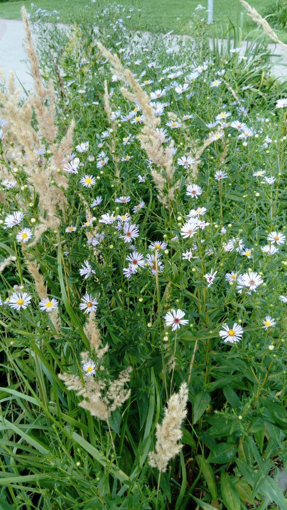 Летние цветы .