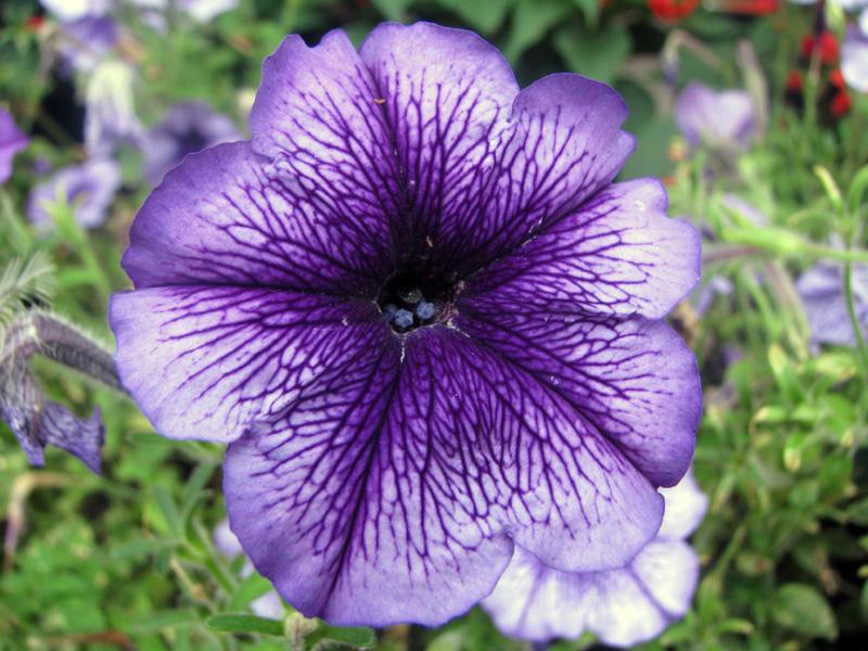 Чудо . Блиц: летние цветы