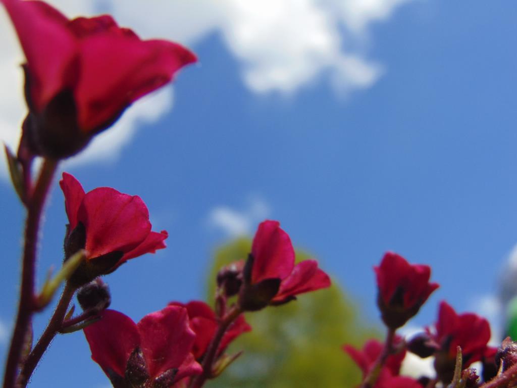 Красота на фоне неба.. Блиц: летние цветы