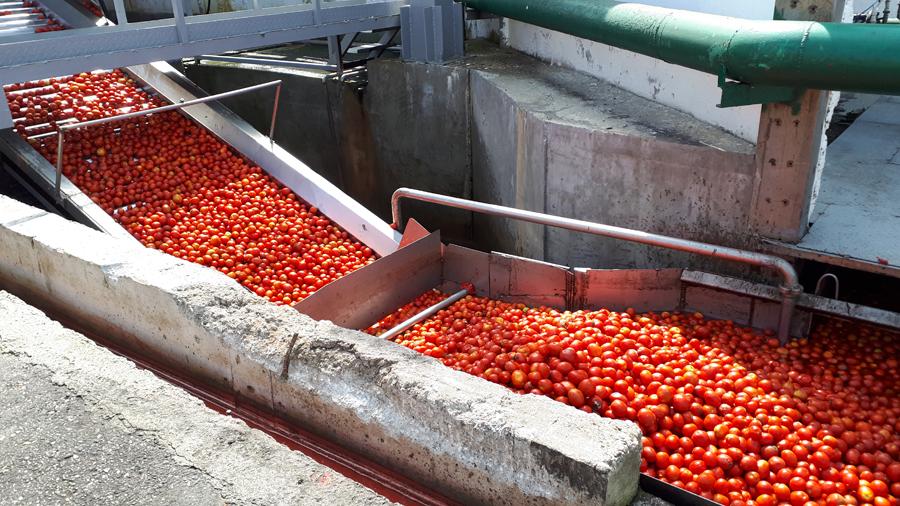 Мойка томатов