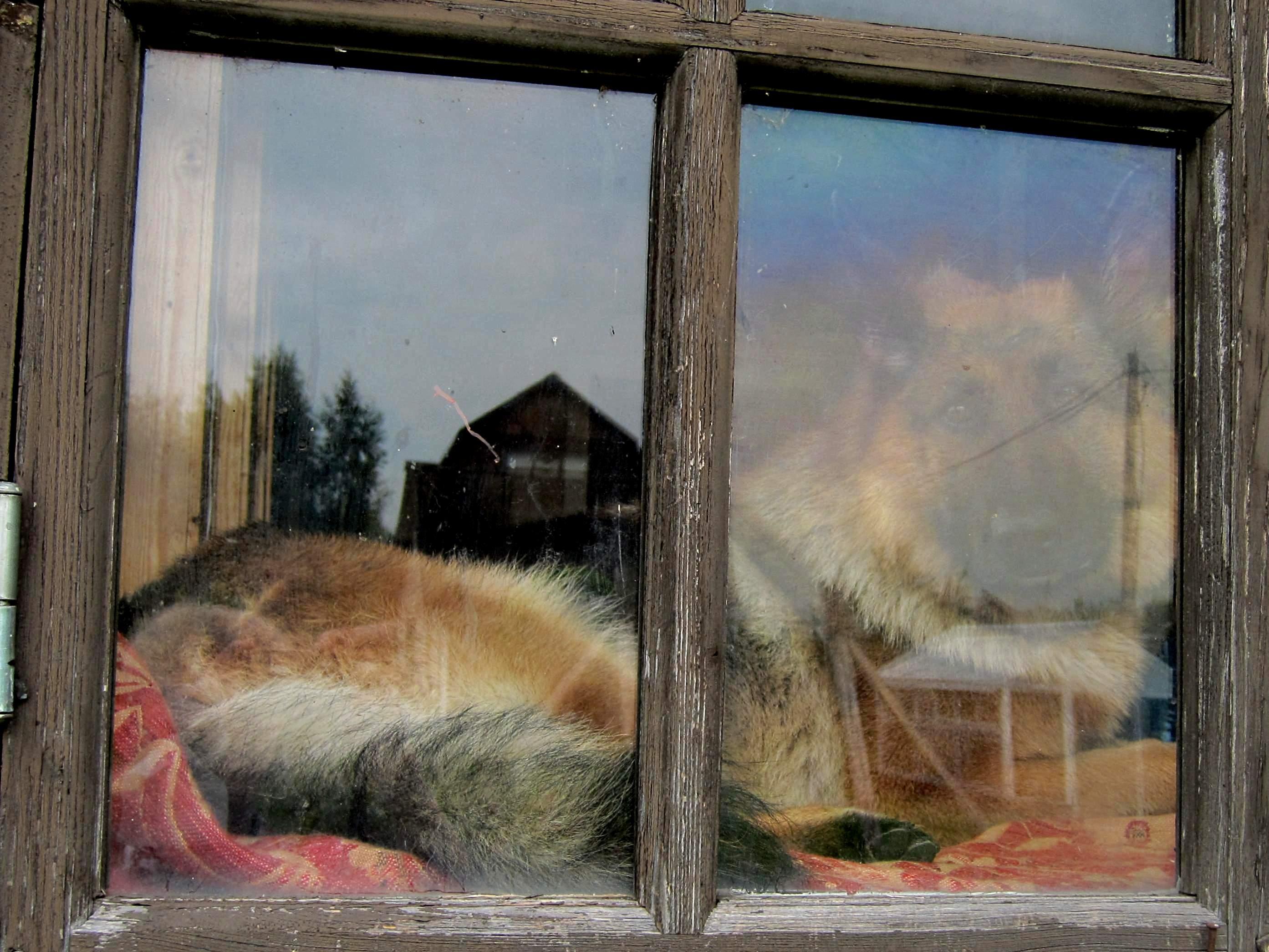 Окно под охраной. Блиц: окна