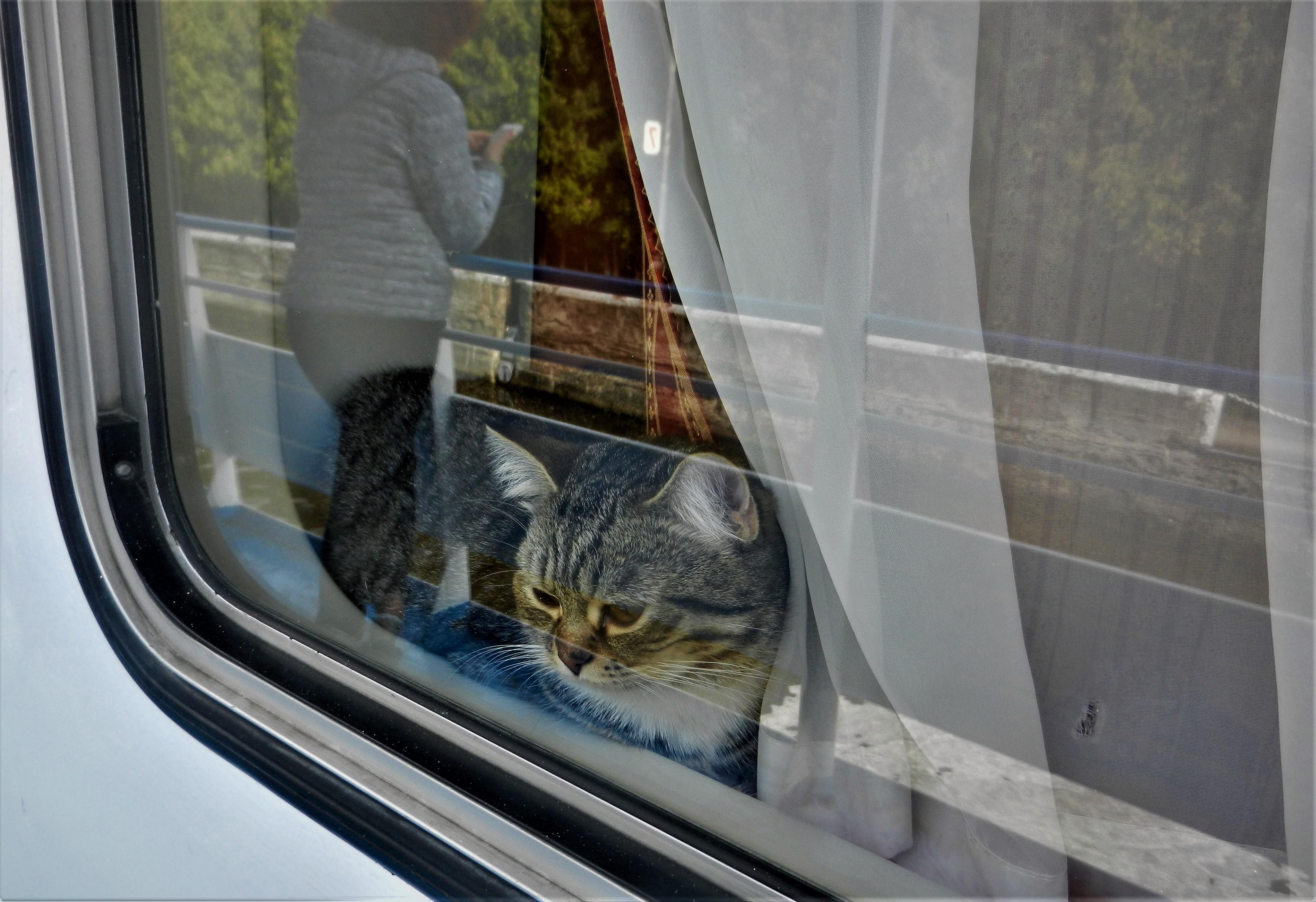 Две Алисы. Блиц: окна
