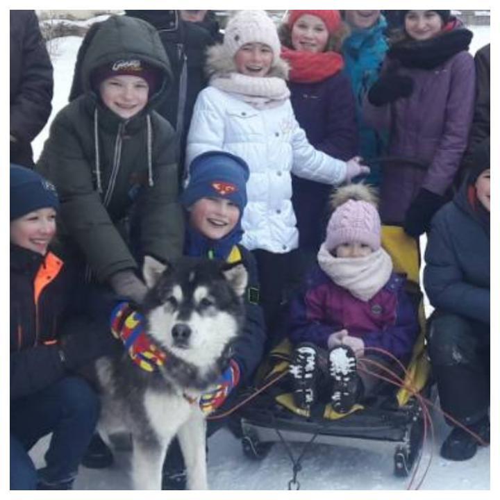Катание на Аляскинских маламутах. Веселая зима