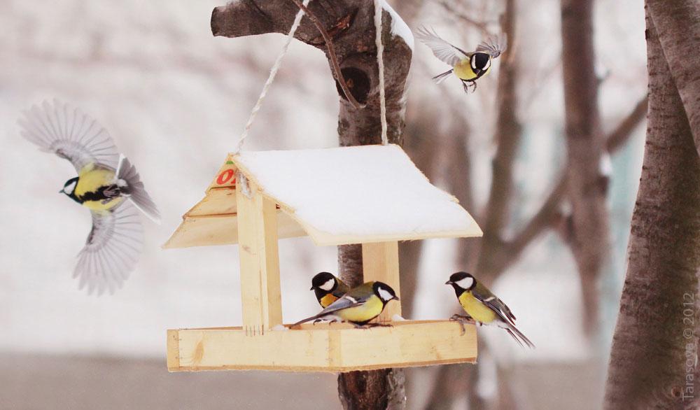 Вебинар о птицах
