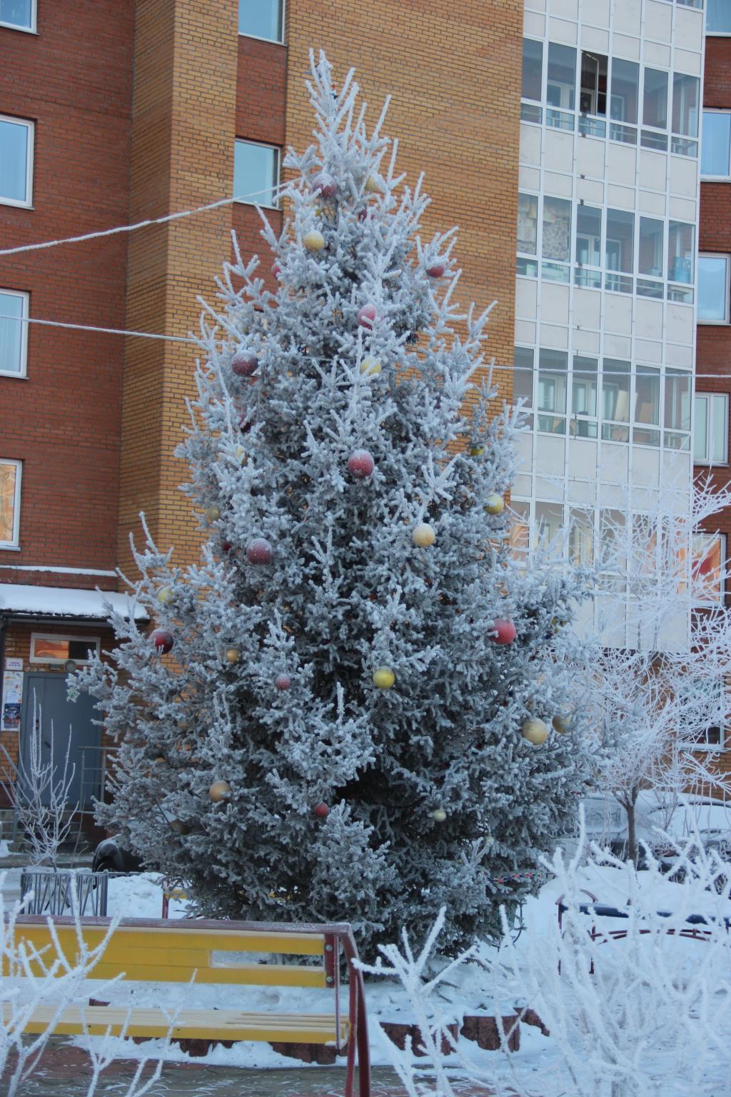 Елочка во дворе морозным утром. Блиц: Ну и елка!