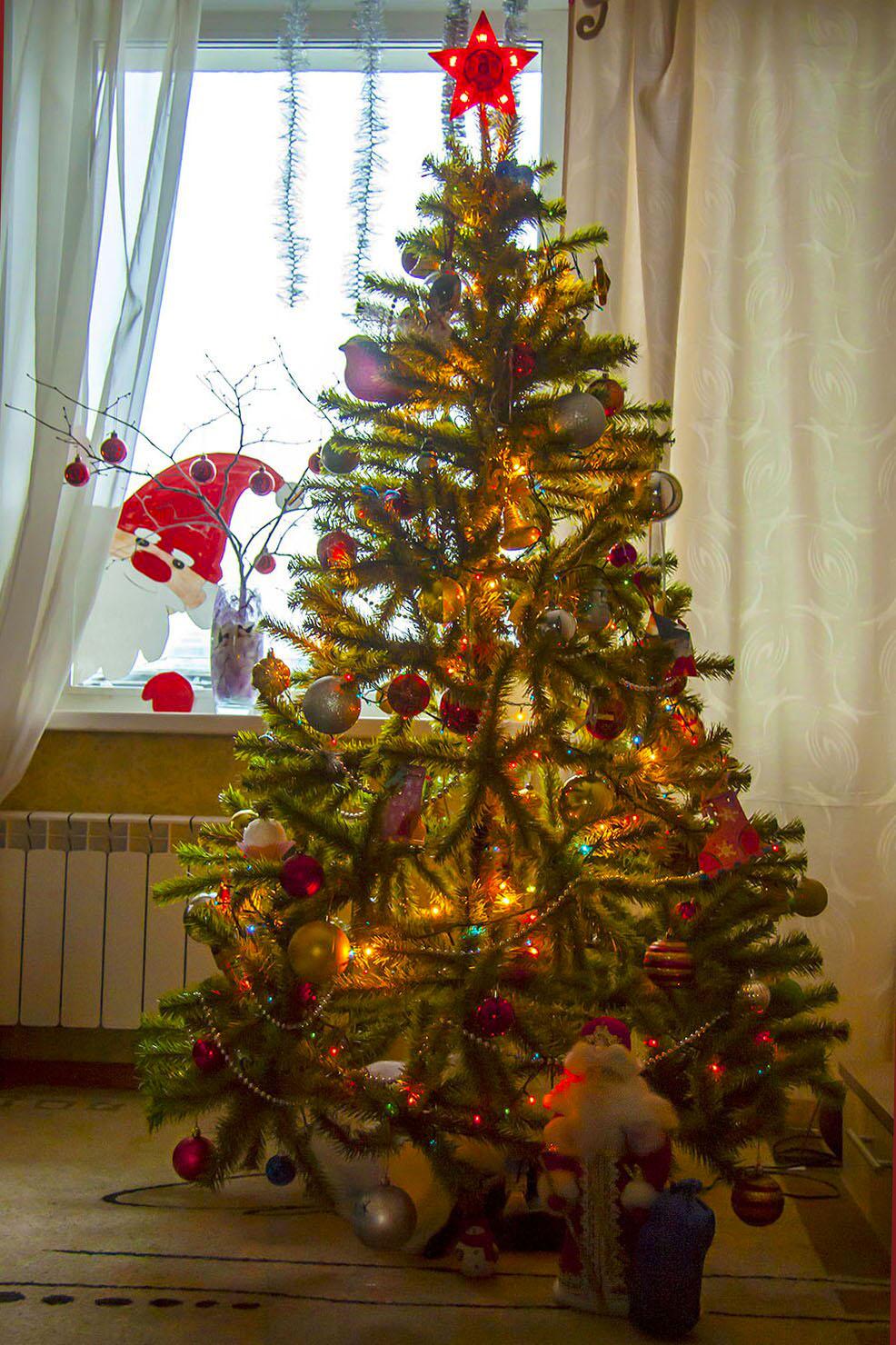 Елочка от Деда Мороза. Блиц: Ну и елка!
