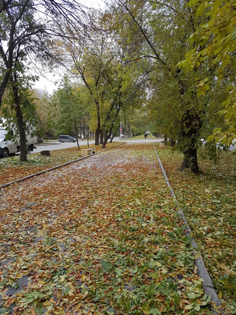 Осеннею порою. Блиц: яркая осень