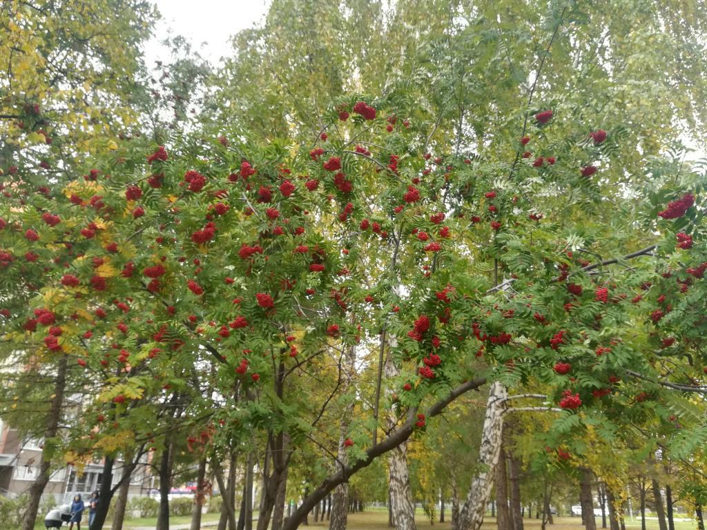 Осень во всей красе. Блиц: яркая осень