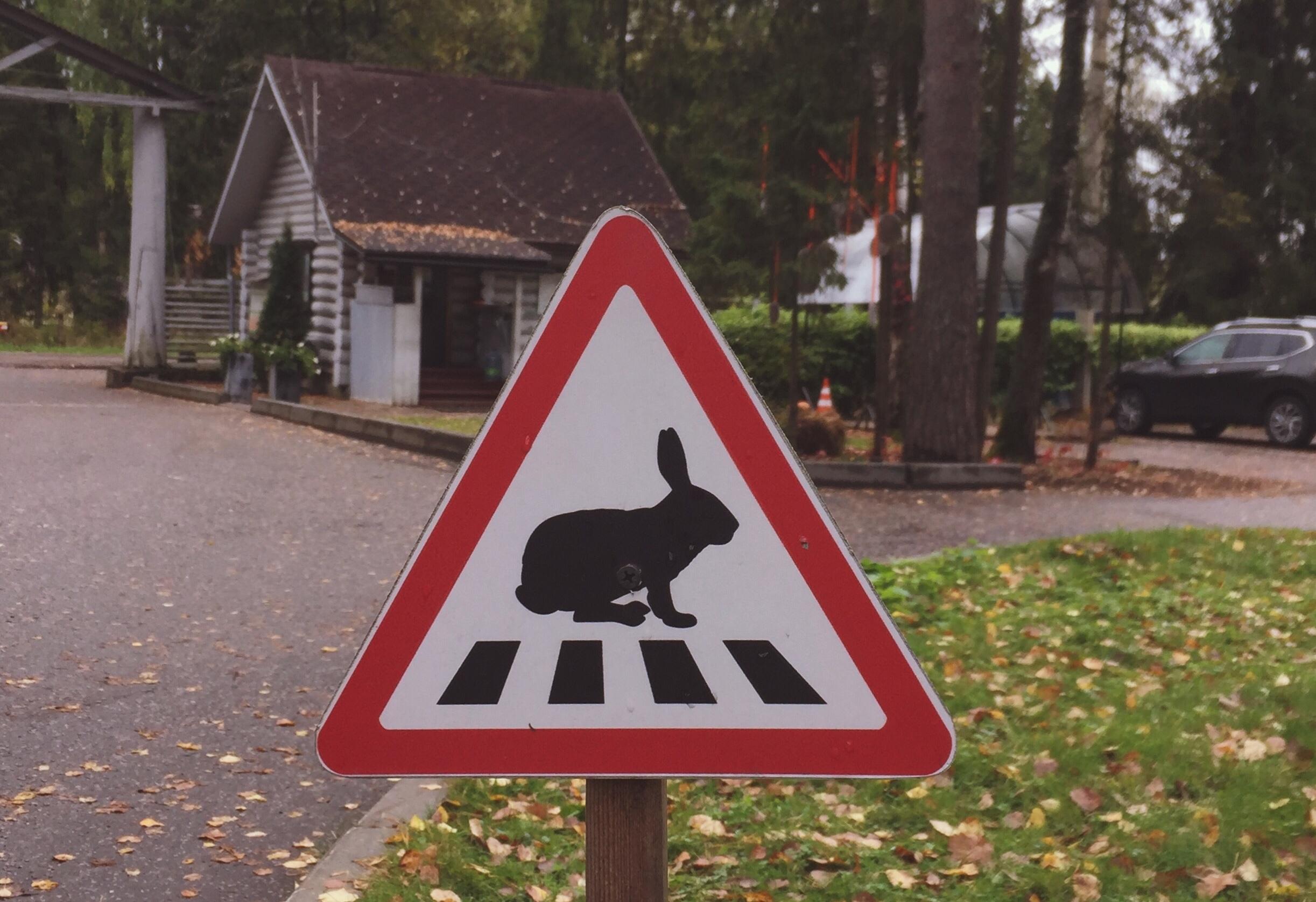 Внимание! Зайцы в городе!. Блиц: вывески и таблички