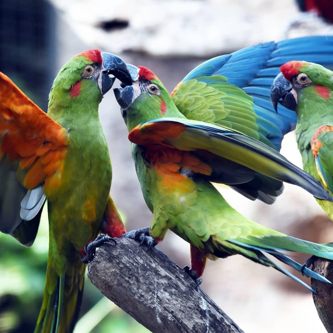 Лоро парк Тенерифе