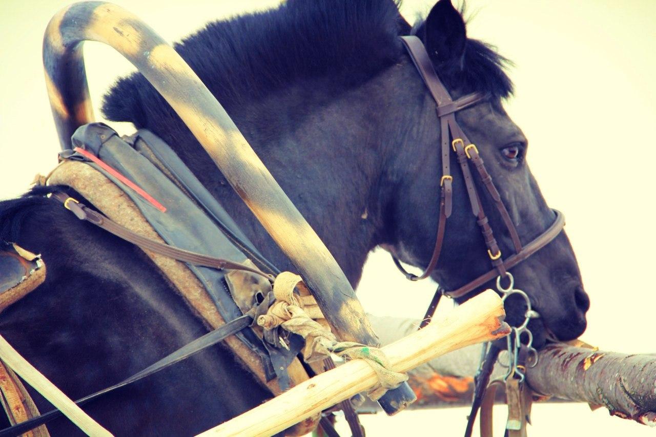 конь. Блиц: скотный двор