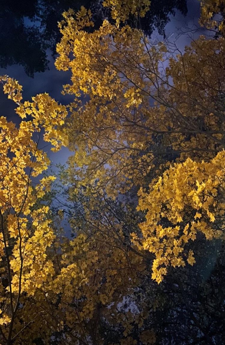 Ночная осень.. Блиц: яркая осень