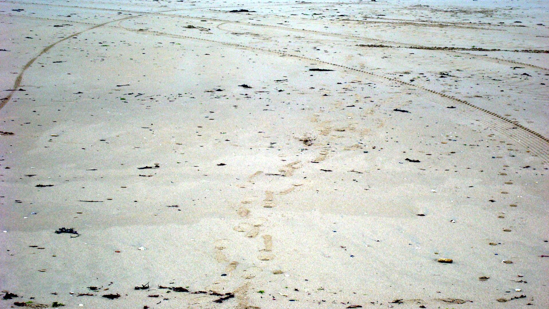 Песок, по которому ты ходила. Блиц: чей след?