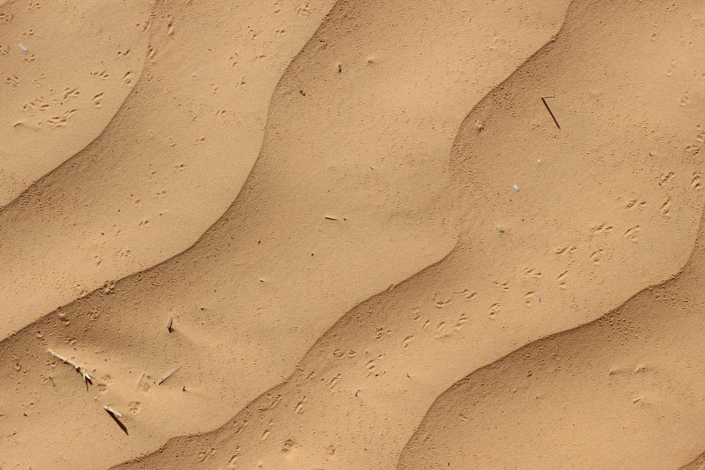Загадки пустыни. Блиц: чей след?