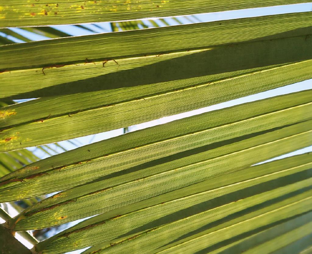 Пальма . Блиц: полосы