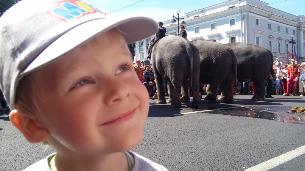 По улицам слонов водили.... Наши дошколята