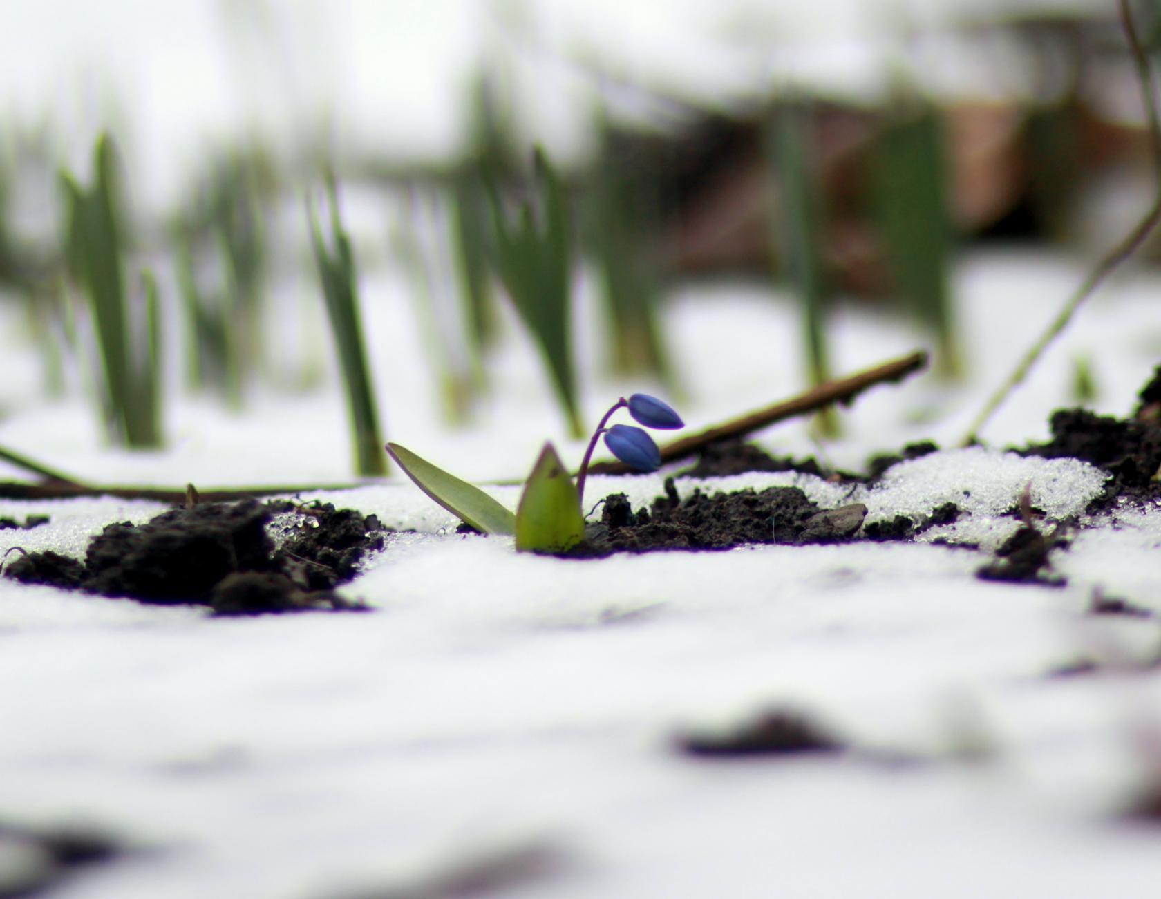 Пробуждение природы!. Блиц: март