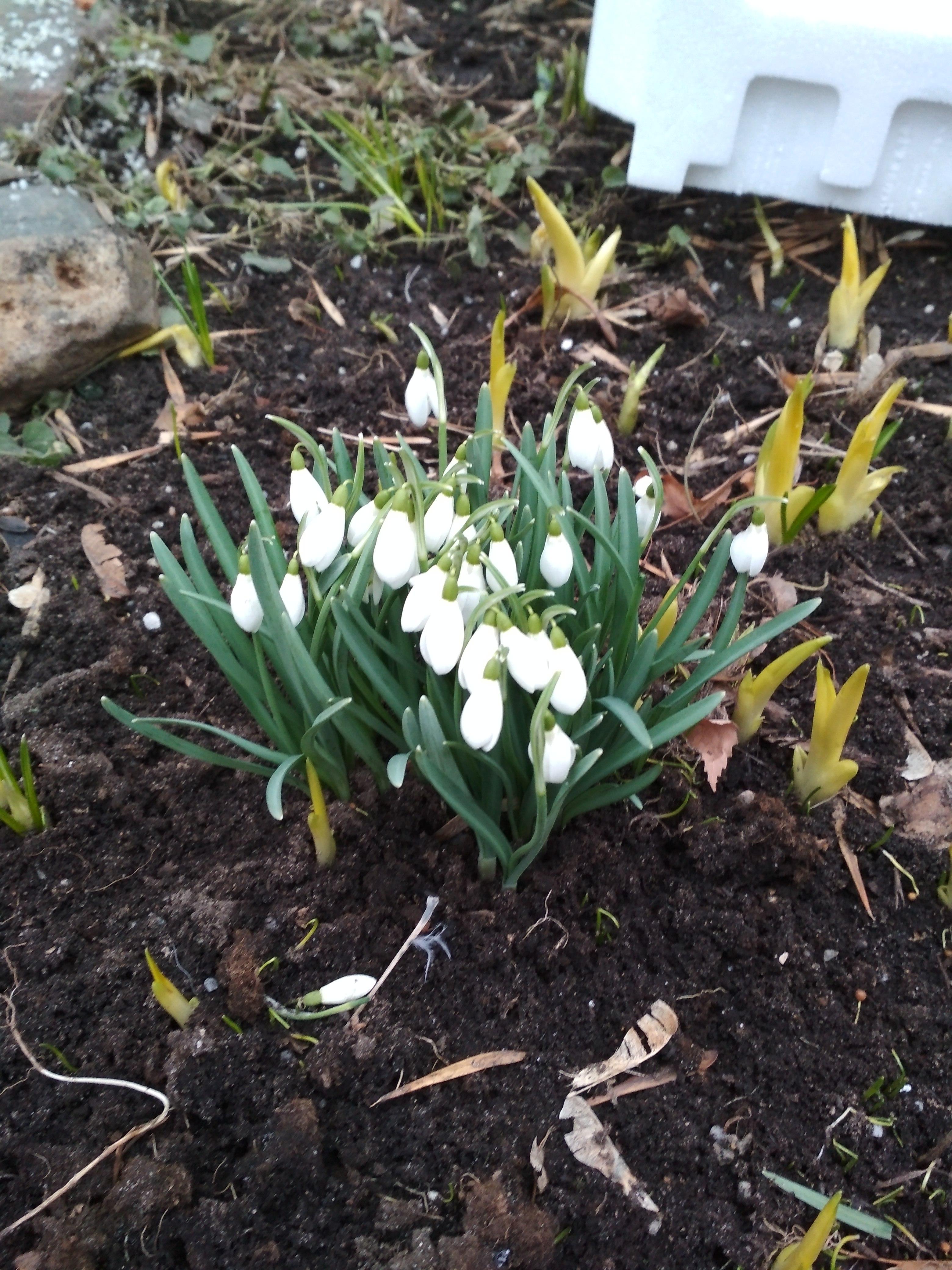 Весна?. Блиц: март