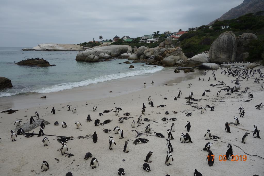 Пингвиний пляж. Блиц: птички