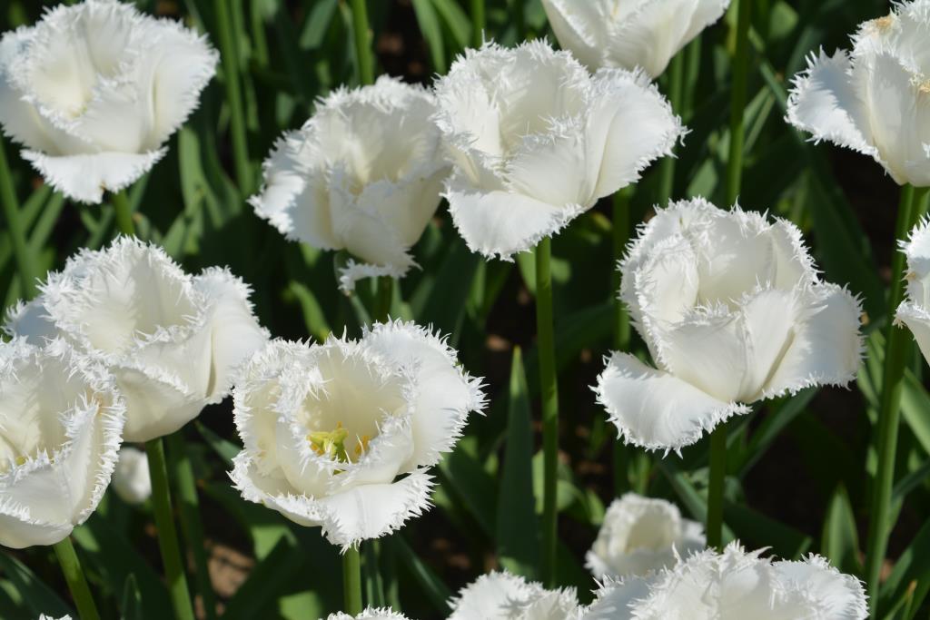 Морозная нежность. Блиц: белые цветы