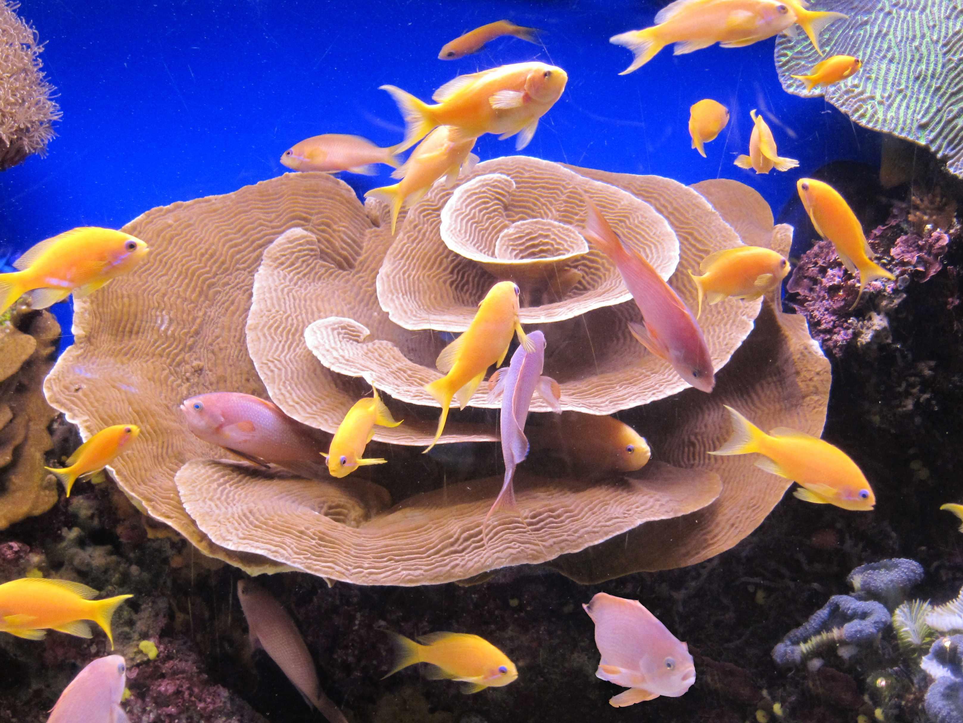 Кораллы. Блиц: камни