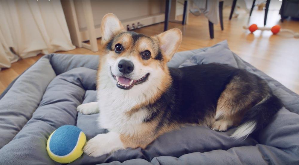 Бесплатный осмотр зубов у собак