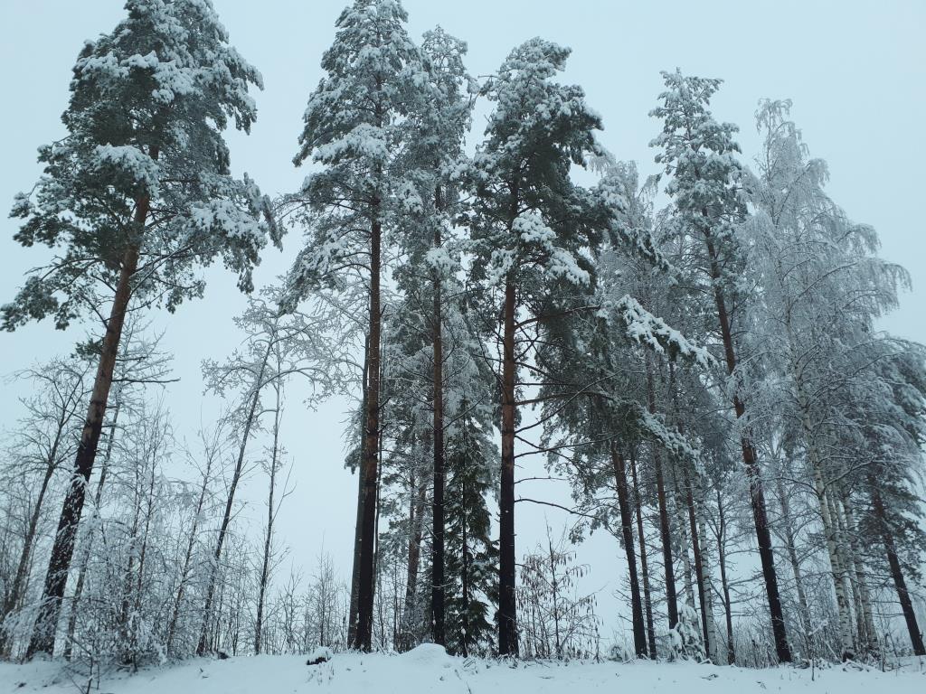 9 апреля, берег финского озера Сайма. Блиц: апрель