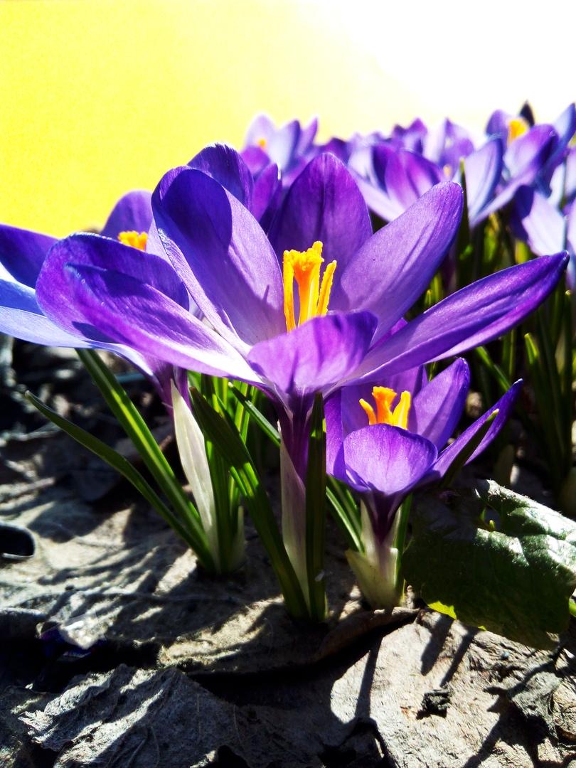 Яркий цвет весны. Блиц: апрель