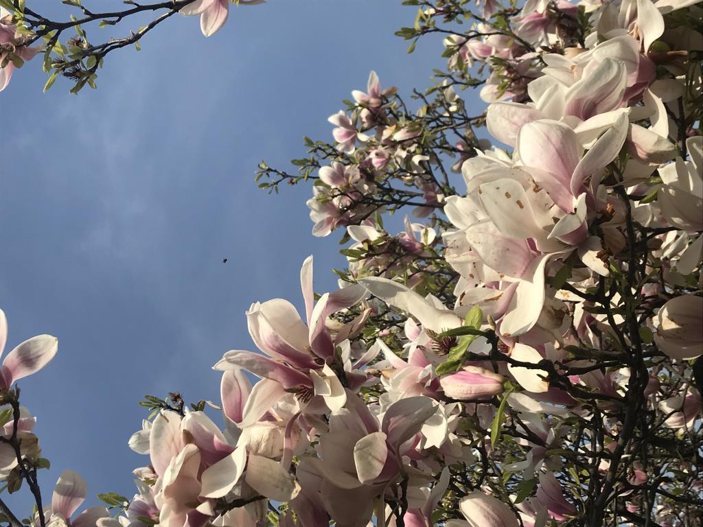 Цвет апреля . Блиц: апрель