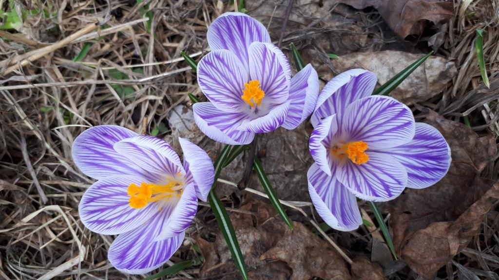 Апрельские первоцветы в парке на Яузе))). Блиц: апрель