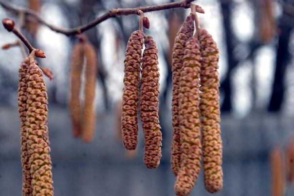 Весна.... Блиц: апрель