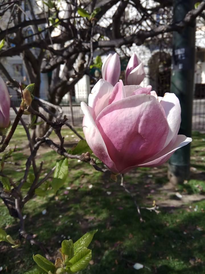 Первые апрельские дни на севере Италии. Блиц: апрель