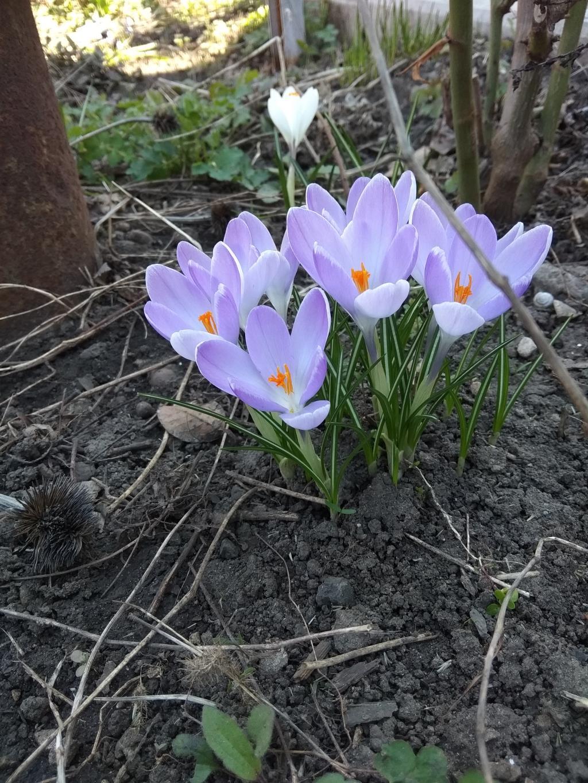 Весна , как и цветы - лишь мгновение .... Блиц: апрель