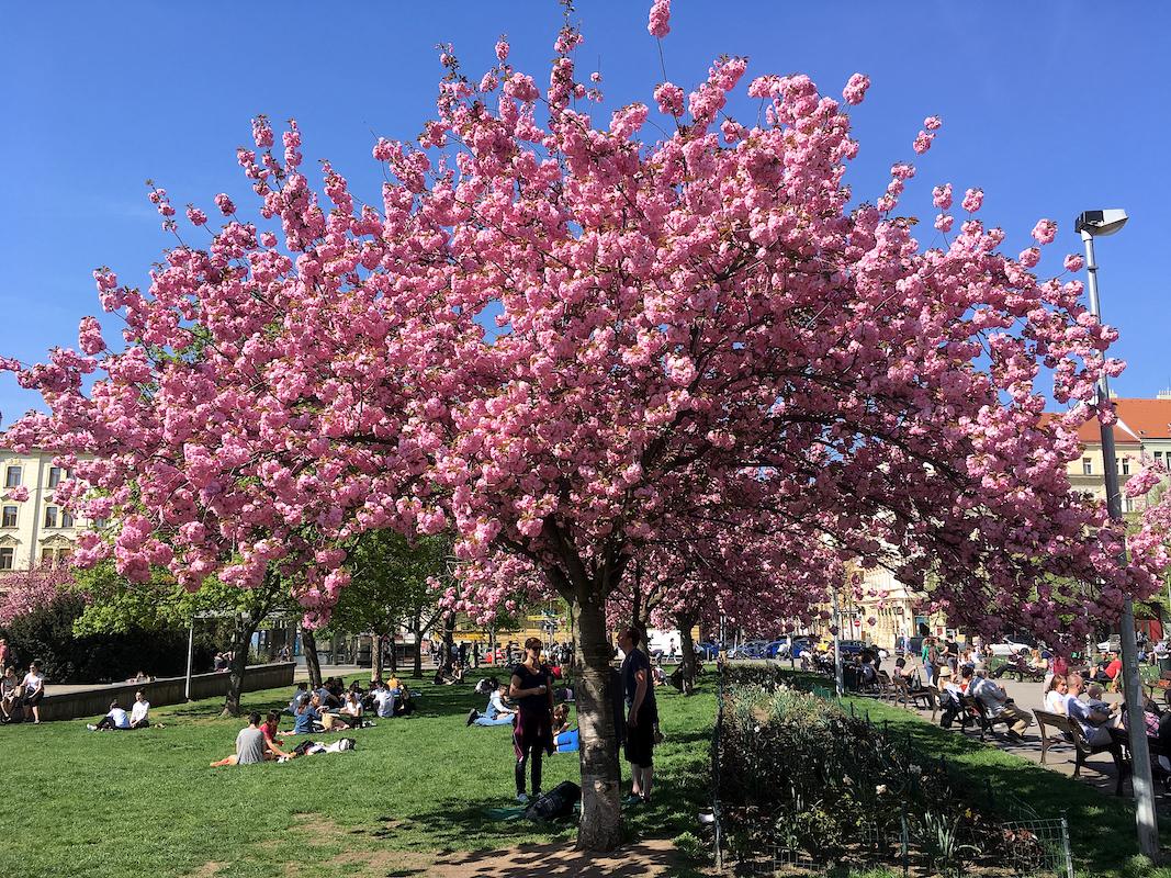 Апрельский выходной в Праге. Блиц: апрель