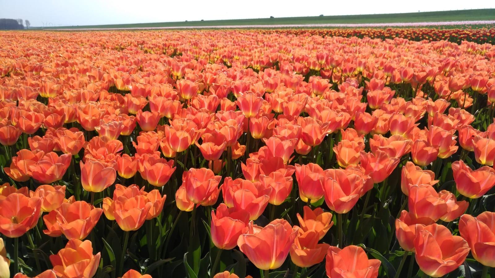 Апрель в Голандии!!!. Блиц: апрель