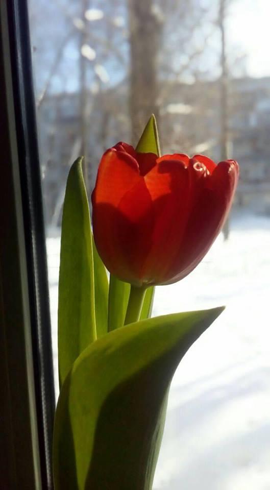 Весна в феврале. Блиц: красные цветы