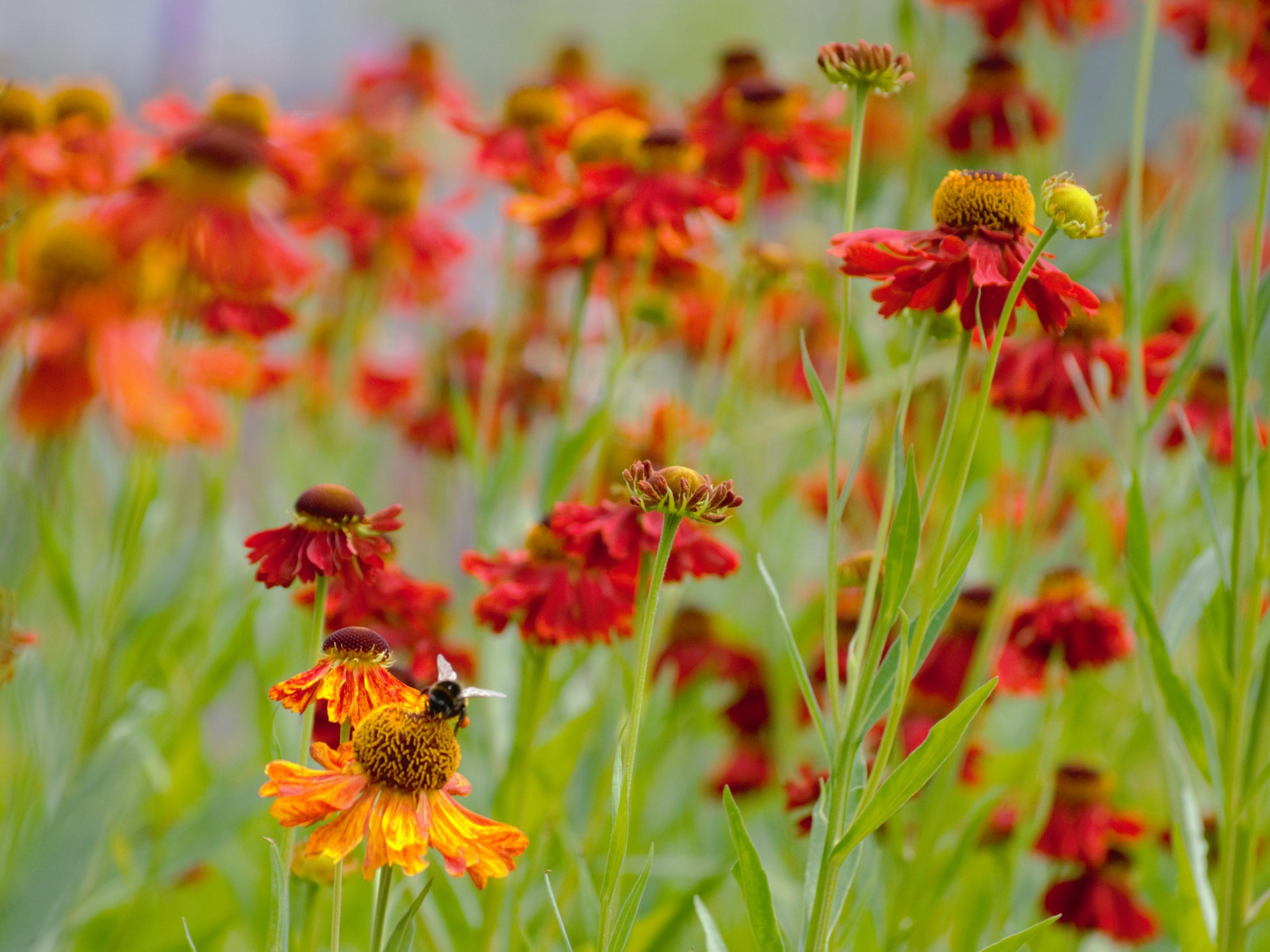 прекрасное цветочное поле. Блиц: красные цветы