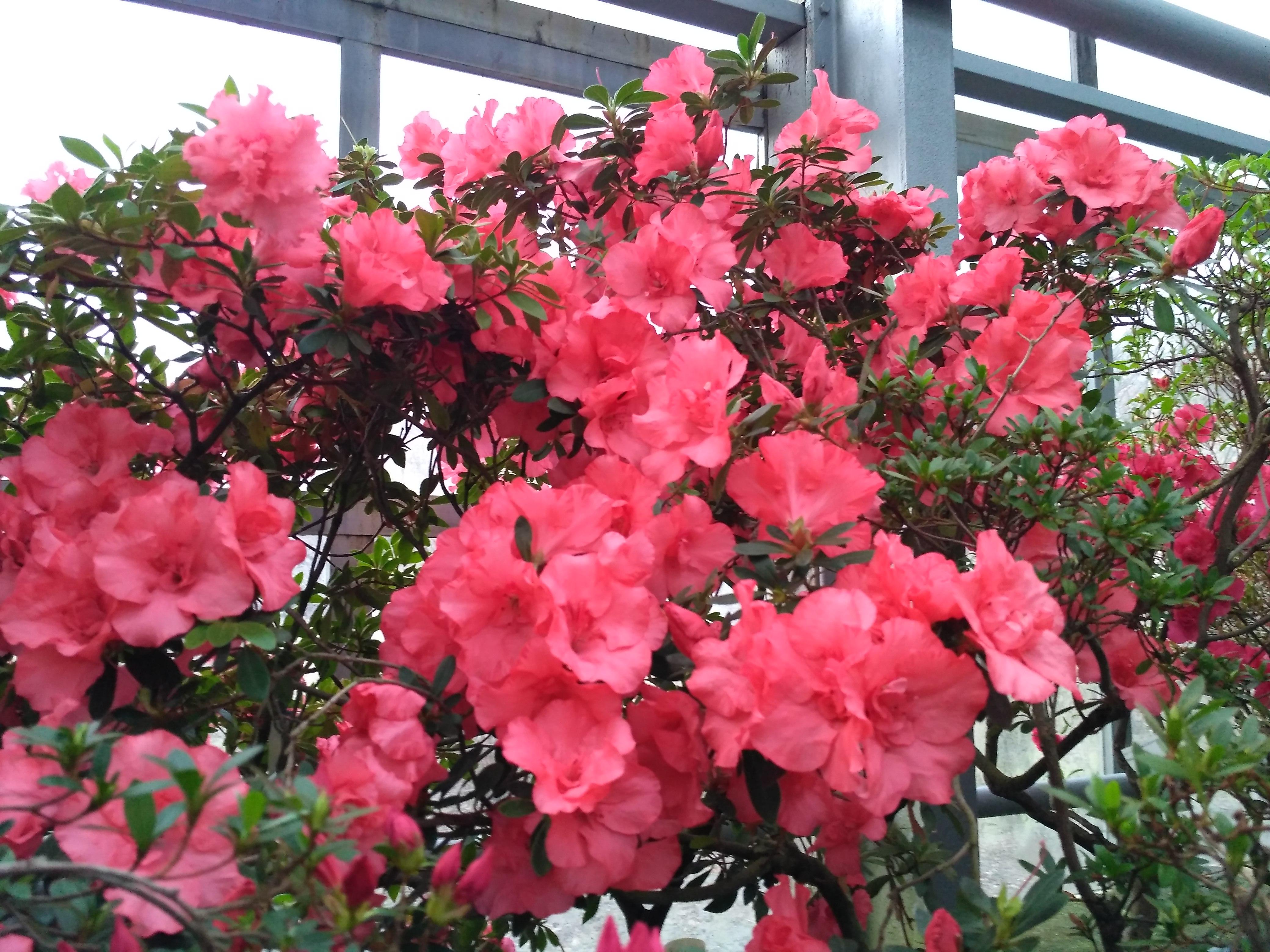 Красные цветы в Оранжерее. Блиц: красные цветы