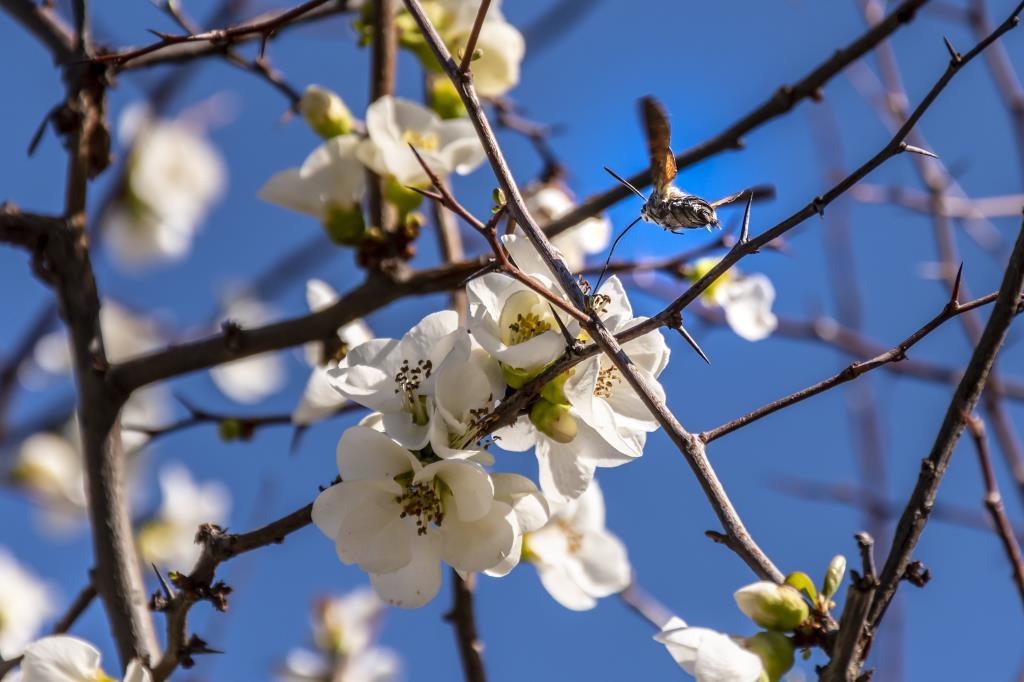Бортник. Блиц: белые цветы