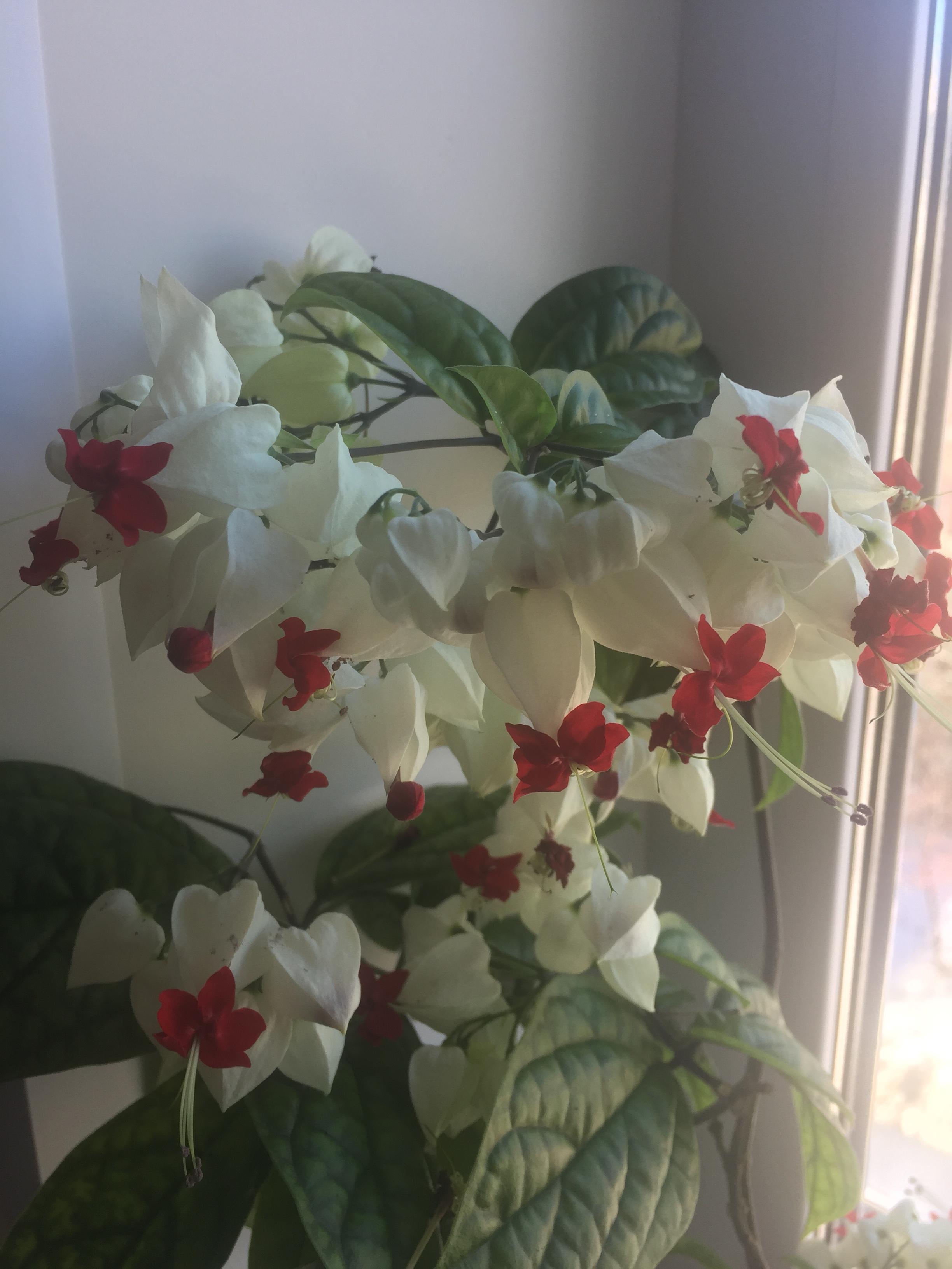 Нежность, созданная природой. Блиц: белые цветы