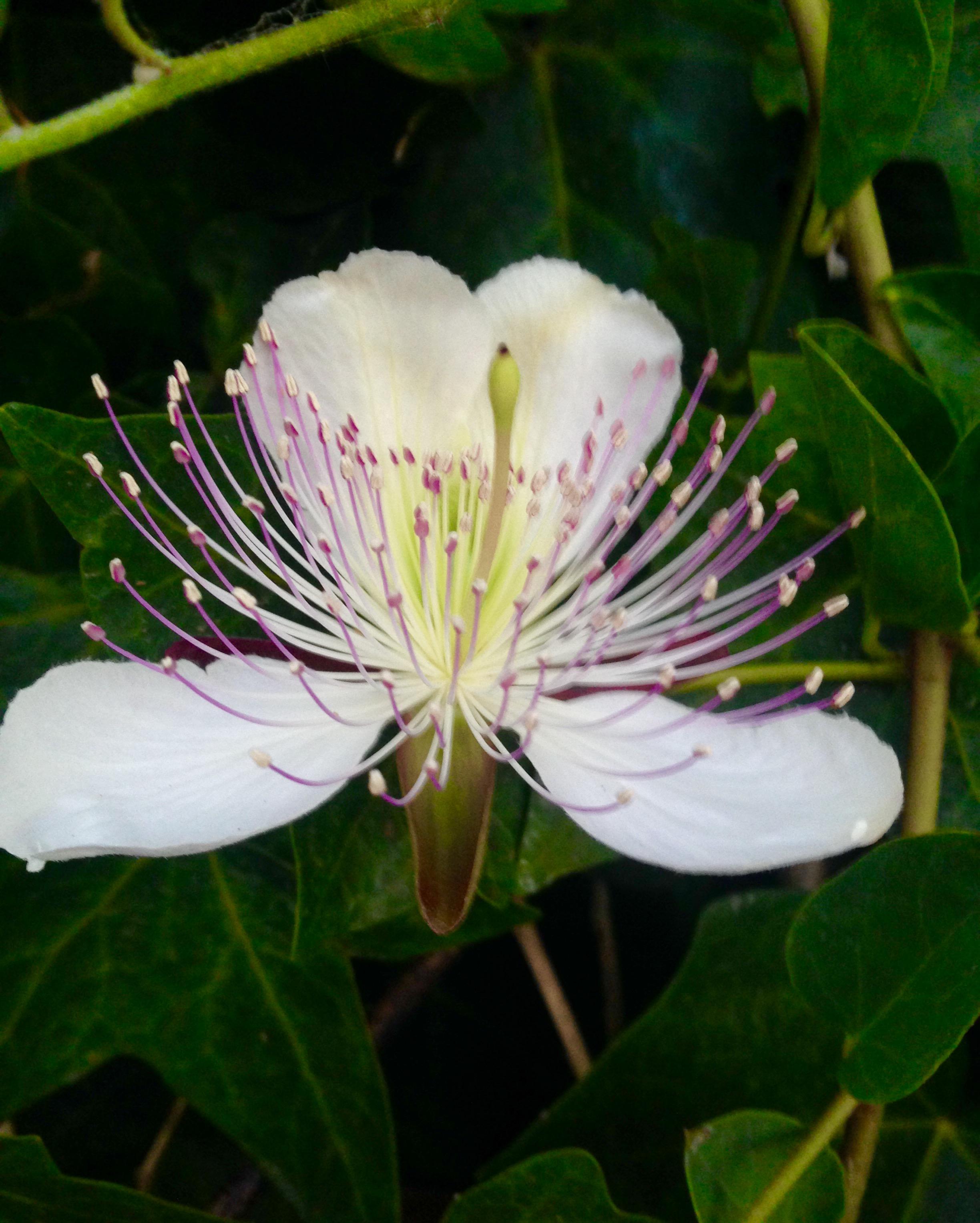 Нежность. Блиц: белые цветы