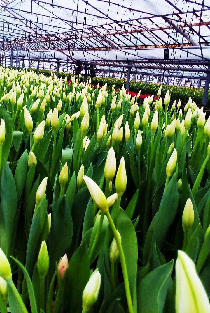 Наша теплица к весне готова!. Блиц: белые цветы