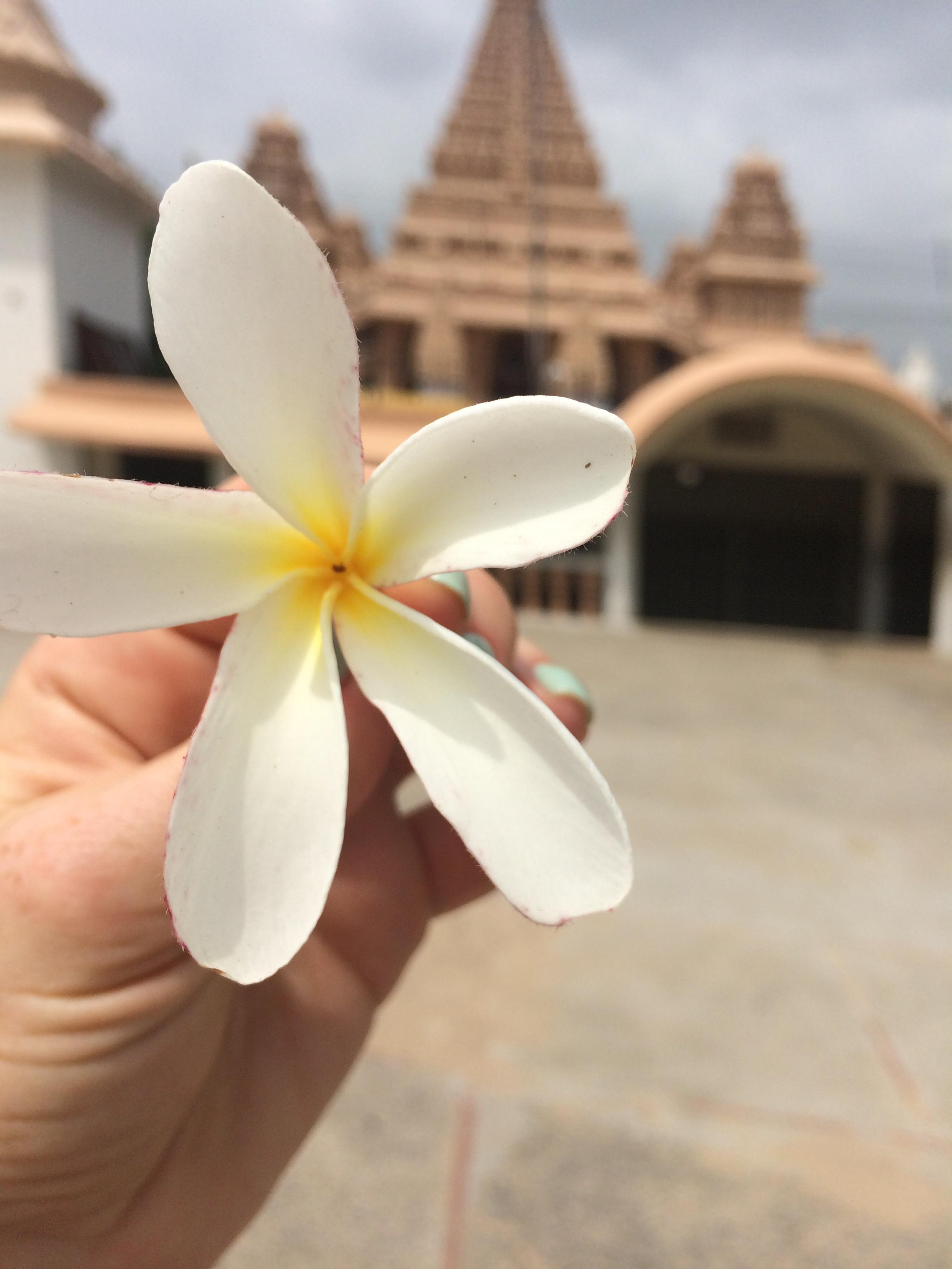 Из Индии с любовью. Блиц: белые цветы
