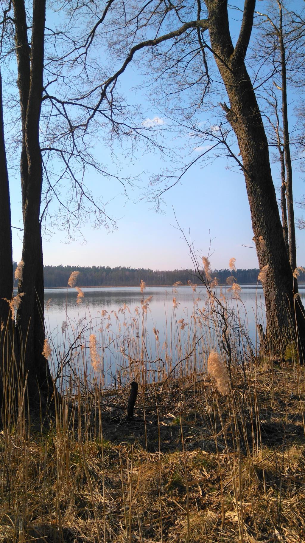 Лесное озеро . Лесной пейзаж