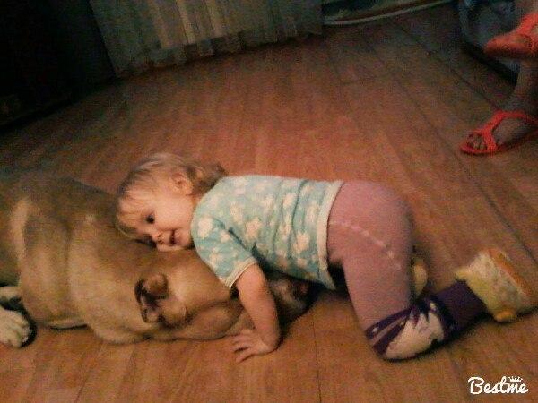 Друзья с детства . Моя собака
