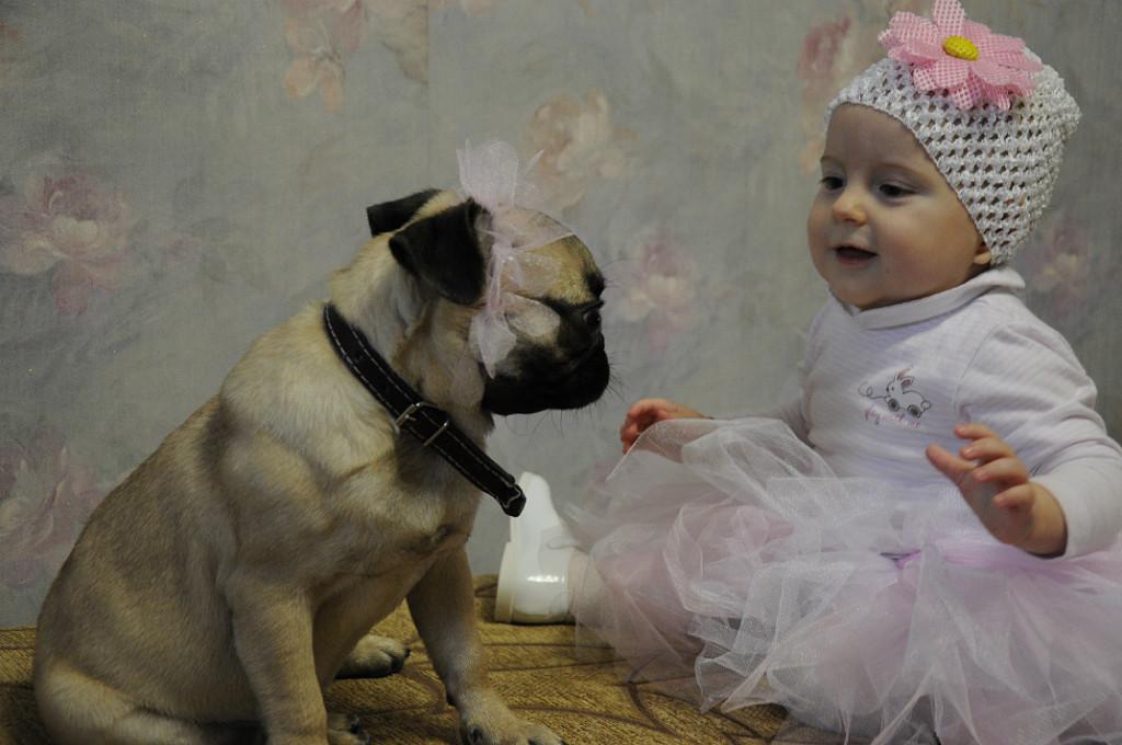 Две красотки!. Моя собака