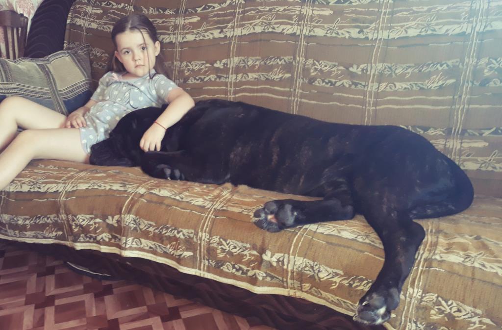 Маша и ее любимый кане-корсо Ричард. Моя собака